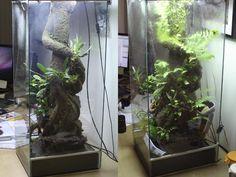 360 vertical frog paludarium