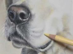 Pastel Painting Demonstration-Labrador Retriever by Roberta Roby Baer PSA