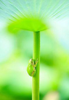 De avonturen van een groene kikker | Froot.nl