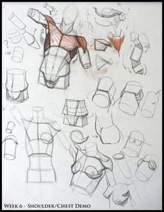 Analytical Figure Drawing SP08: Week 6 - Shoulder & Chest Structure Demo