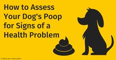 A veterinarian's tips - when your dog's poop looks like this, you need to visit your vet!