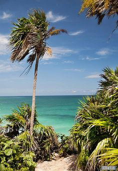 The beaches of Tulum, Mexico >> Palm Trees are always a welcome site! #JetsetterCurator