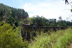 Picture taken of a train going across nine arches bridge in ella on our 3 week sri lanka route