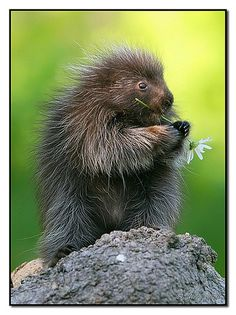 porcupine! He doesn't seem so bad...