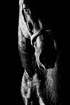 Night Horse - Photography by Raphael Macek All The Pretty Horses, Beautiful Horses, Animals Beautiful, Simply Beautiful, Black Horses, Wild Horses, Dark Horse, Horse Photos, Horse Pictures