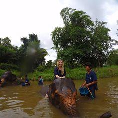 Sexy Women riding and washing bareback on an Elephant in the Jungle .  #elephantridinginthailand #thailand #chiangmai #elephant #elephantrider