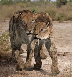 Smilodon supporting injured member from Walking with Beasts