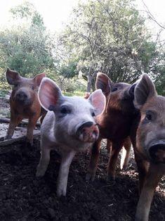 Termelői profil | Microker Cow, Animals, Profile, Animales, Animaux, Animais, Stuffing, Animal