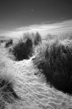 Sand Dunes at Newborough Beach, Anglesey