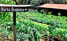 7 dicas orgânicas para cuidar de sua horta