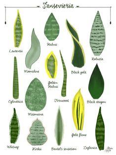 Indoor Plants, Garden Plants, House Plants, Cactus Plants, Cactus E Suculentas, Snake Plant Care, Sansevieria Plant, Pot Jardin, Decoration Plante