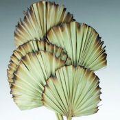 Burnt Sun Palm Fans - Burnt Palm Fan - More Great Ideas from CuriousCountryCreations.com
