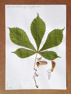 """mit Herbstblätter """"zeichnen"""""""