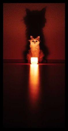 Racconto del terrore con gatto