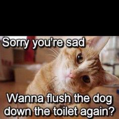 Cat humor ;)