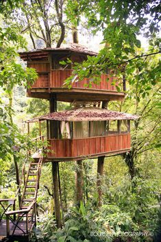 Mis Ojos tree house at finca bellavista. The first tree house in our community!