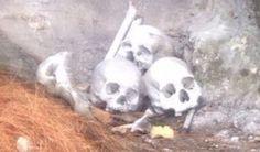 <p>Cuauhtémoc, Chih.- El personal de Investigación de la Fiscalía zona occidente, tomó conocimiento del hallazgo de tres cráneos