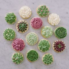 Succulent Sugar Cookies from Jenny Cookies Bakeshop 39 Iced Cookies, Royal Icing Cookies, Fun Cookies, Cupcake Cookies, Decorated Cookies, Creative Cake Decorating, Cookie Decorating, Flower Sugar Cookies, Succulent Cupcakes