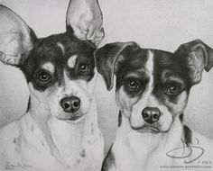 Dog Drawing of Maggie and Murphy, Rat Terrier Drawing