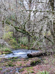 After the storms...the creek calms down a bit at Stueve Place