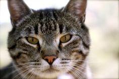 fussie cat dry food