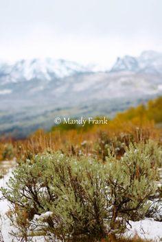 Wyoming Sagebrush