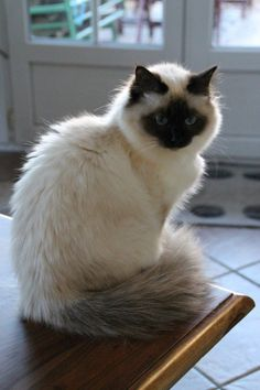 These cute cats will make you amazed. Cats are fascinating companions. I Love Cats, Crazy Cats, Cool Cats, Pretty Cats, Beautiful Cats, Kittens Cutest, Cats And Kittens, Cats Meowing, Dog Cat