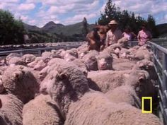 VIDEO: Did you know dogs can be used to herd sheep, find people and pull loads? Watch this video to learn more about the professions dogs have.