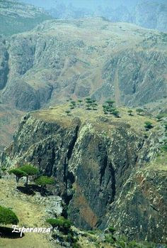 Socotra Island Holidays and Tours Places Around The World, Around The Worlds, Dragon Blood Tree, Island Holidays, Socotra, Marine Reserves, Exotic Places, Places Of Interest, New Adventures