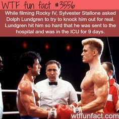 You mean rocky wasn't a better fighter?? childhood ruined