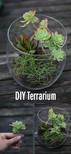 Make a personalized Terrarium! Takes about 2h to make and costs under 20$. And it's fun too!