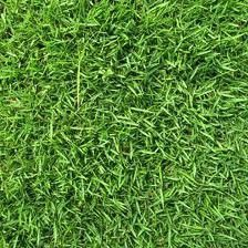 Zoysia grass seed is an extremely durable groundcover. The blades of this type of grass are extremely . Read moreBuyers Guide To Zoysia Grass Seed Zoysia Grass Seed, Drought Tolerant Grass, Growing Grass From Seed, Fake Grass, Grass Field, Lawn Care, Lawn And Garden, Organic Gardening, Home
