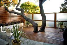 L'intégration de l'arbre dans l'aménagement. L'integrazione dell'albero nell'architettura.