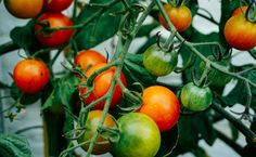 How To Grow Food In One Container All Year Round | Care2 Healthy Living