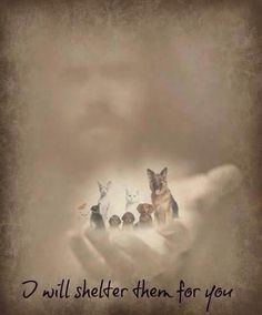 God loves our fur babies! He wouldn't let them just cease to exist; Animals do have a soul, and we'll see them again in heaven. Dog Quotes, Animal Quotes, Animals And Pets, Cute Animals, Pet Loss Grief, Image Jesus, Pet Remembrance, Tier Fotos, Rainbow Bridge