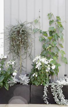 Lovely green, white, and grey plants on terrace
