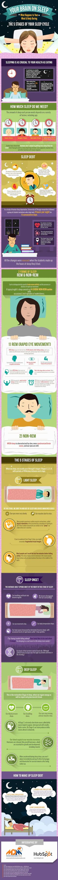 What happens to your brain during the 5 stages of your sleep cycle