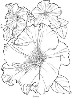 Petunias In Full Bloom line drawing pattern Coloring Book Pages, Coloring Sheets, Silk Painting, Painting & Drawing, Watercolor Painting, Illustration, Colorful Flowers, Flower Art, Line Art