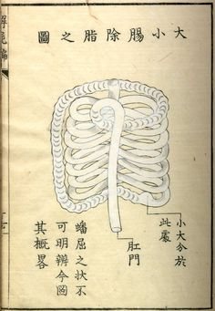 Set of anatomical illustrations that provide a unique perspective on the evolution of medical knowledge in Japan during the Edo period saw a copy in a Japanese museum once and want a … Medical Drawings, Medical Illustrations, Medical Art, Art Illustrations, Graphic Illustration, Japanese Museum, Edo Period Japan, Design Observer, Vintage Medical