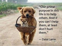 """""""Our prime purpose in life is to help others.  And if you can't help then, at least don't hurt them.""""  ~  Dalai Lama"""
