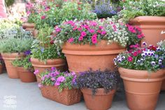 The Secrets to a Successful Container Garden