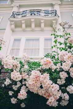 Climbing roses in Pac Heights, San Francisco