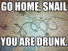 Drunk snails are awesome