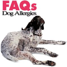Dog Allergy Care: General FAQs