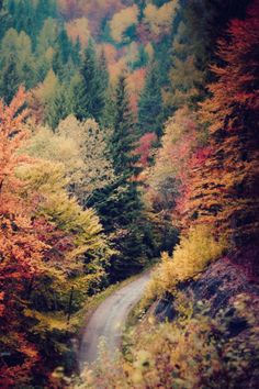 Autumn is my favorite time of the year. The leaves changing colors are so beautiful to me each year.