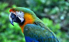Download wallpapers macaw, parrot, colorful parrot, beautiful birds