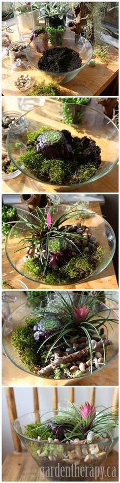 DIY Terrarium Project Using a Salad Bowl