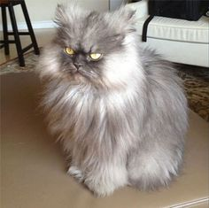 The internet has lost a point in the trifecta of famous cats. Colonel Meow grew a pair of fluffy angel wings and few off to heaven last night. A real cat star. His last appearance was a few weeks ago at the a launch party for his Friskies commercial.