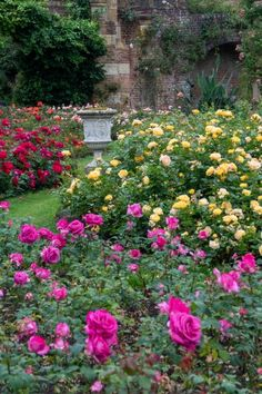 Successful rose growing tips - it's so important to feed your roses! #gardening #roses #middlesizedgarden #backyard Growing Roses, Colorful Garden, Backyard, Gardening, Colour, Tips, Plants, Yard, Garten
