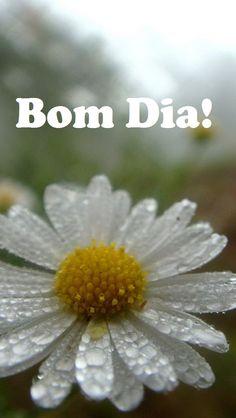 Bom Dia meu Amor !!! Feliz Dia e um clima maravilhoso para Nós !!! Te Amo !!!!